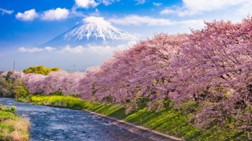 cherry-blossom-in-japan-1567592647-785X440