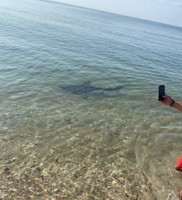 Shark_mattituck_2_0726
